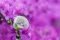 20180508-flowers-3